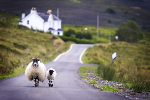 Rush hour in the Highlands